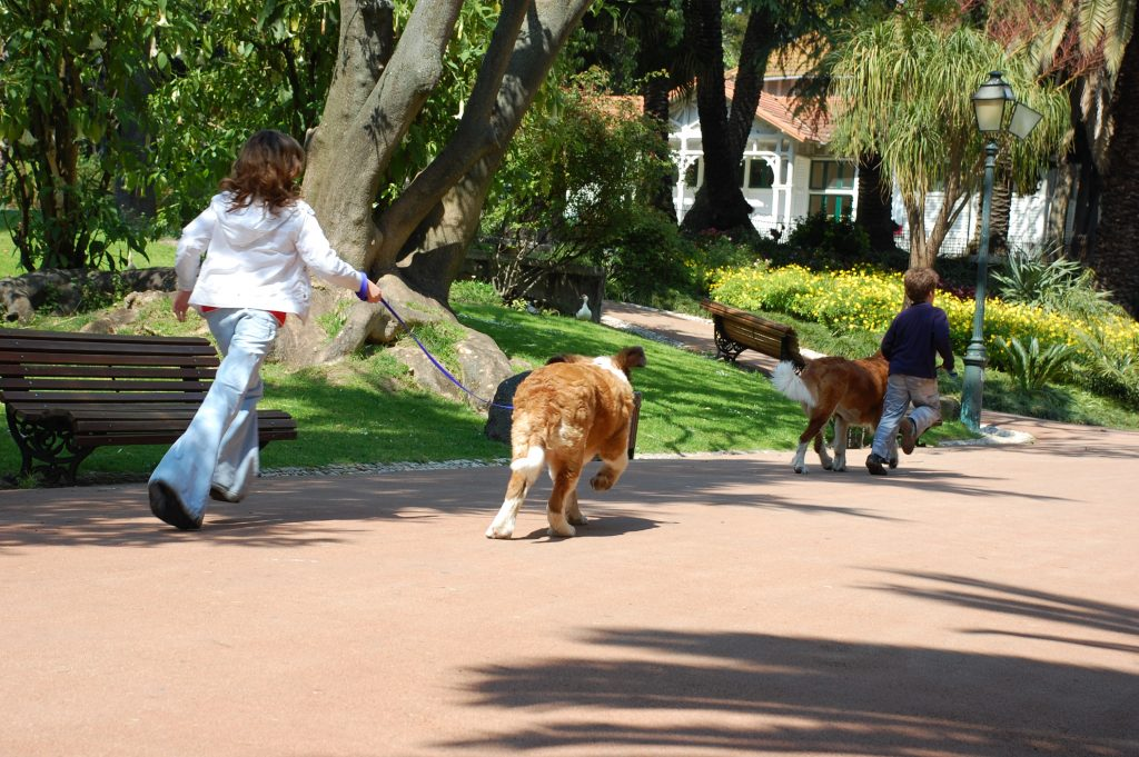 "The dogs were just about as big as the kids ""walking"" them in the Jardim de Estrela (which is formally known as the Jardim Guerra Junqueiro"