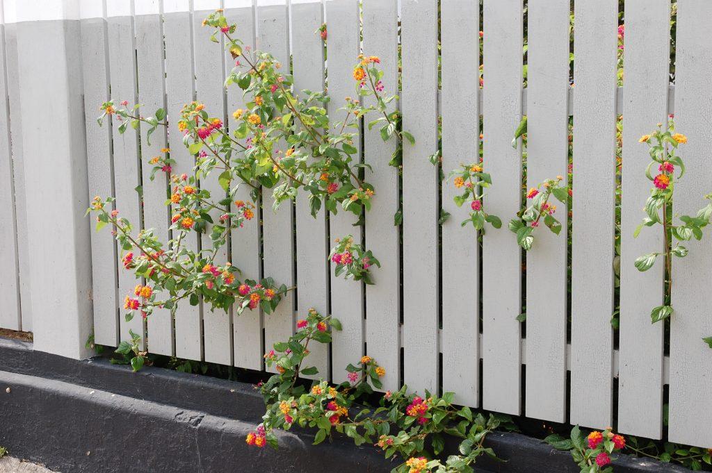 Lovely flowers in O Sítio.
