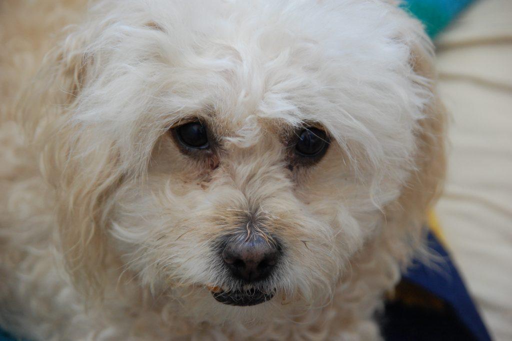 A famosa Susana, the KOSMUS canine. Susana é um cão especial e estava um prazer em conhecê-se com todo sua família a KOSMUS.
